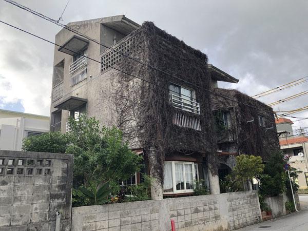 沖縄県浦添市S邸のツタ状況